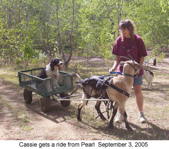 how to train a horse to pull a cart
