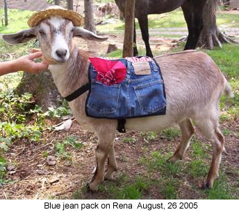 Working Goats - Goat Trick Training