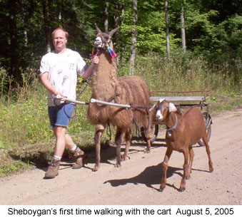 sheboyganwithcart_2005 08 05 working goats harness training goat harness at crackthecode.co